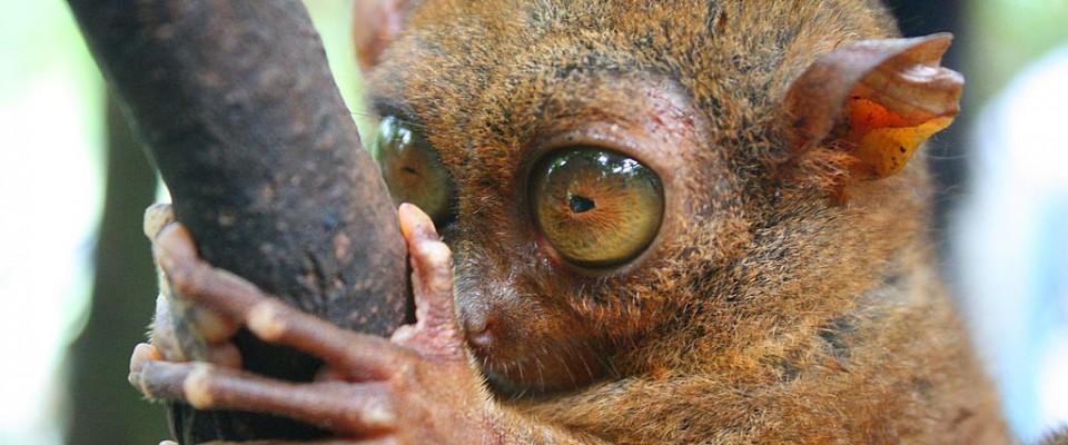 Bohol – chokladkullar och spökdjur